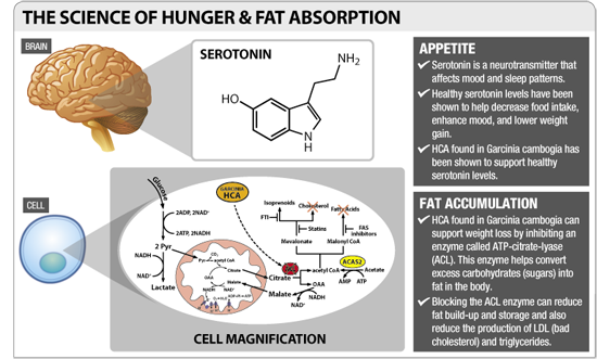 science of Hunger developed by surely slim max by bioparanta to treat obesity